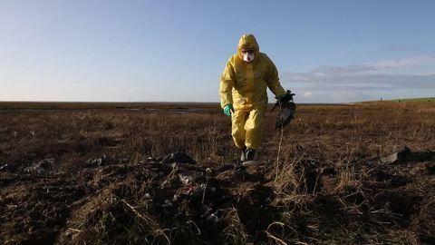 Kampf gegen Vogelgrippe: Kadaver sammeln und Proben nehmen
