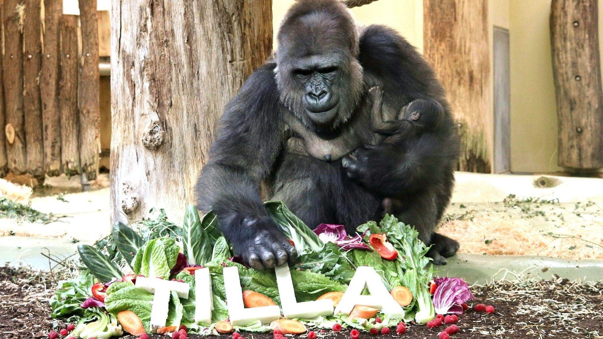 Berliner Gorilla-Baby hat jetzt einen Namen
