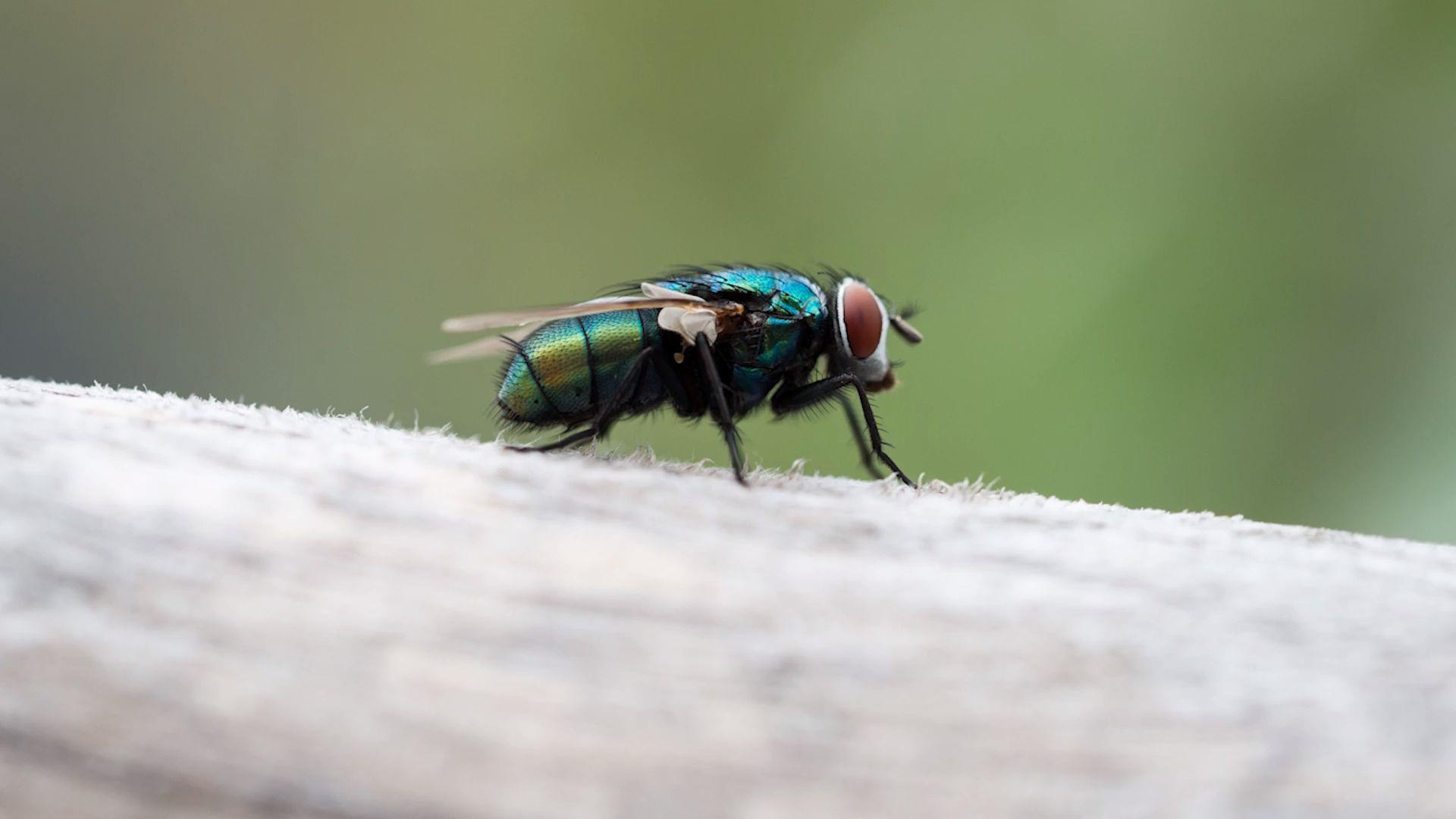 Einfache Hausmittel gegen Fliegen, Mücken und Fruchtfliegen