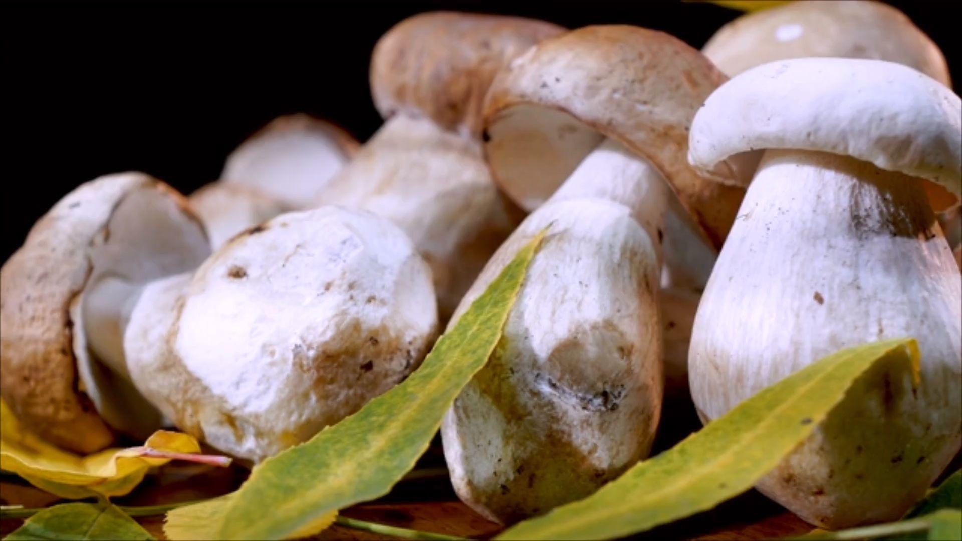 So säubert man Pilze richtig