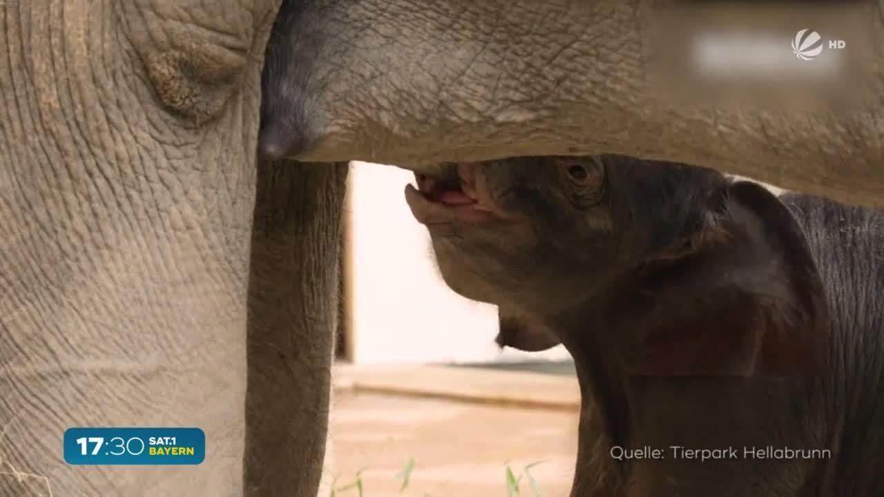Elefanten-Baby Otto: Süßer Nachwuchs im Tierpark Hellabrunn